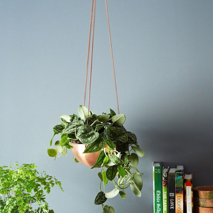 buy hanging planter