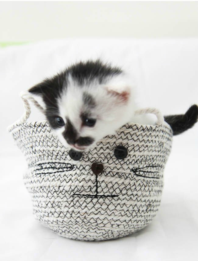 diy cat bin