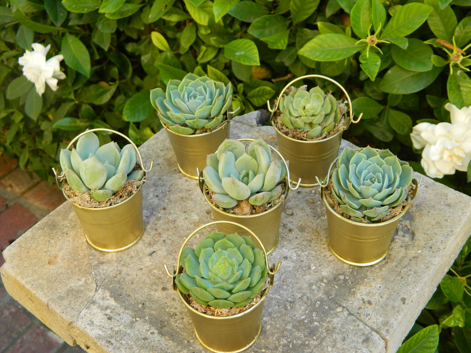 succulent-plants-wedding-favor