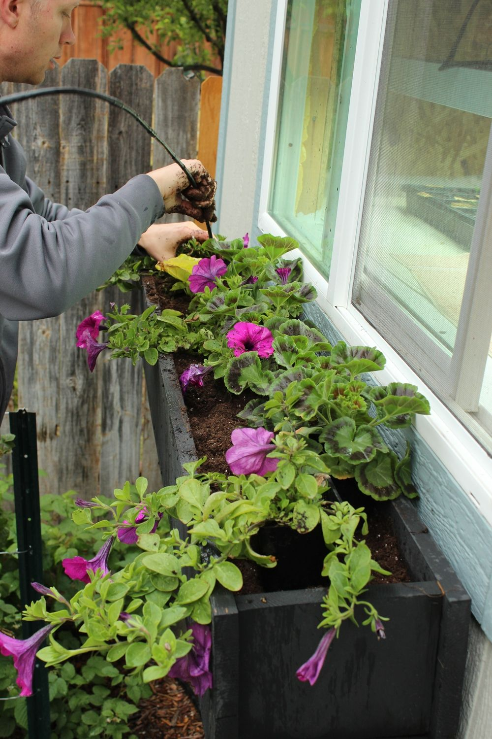 how to plant a window box shade stepbystep guide to planting window box