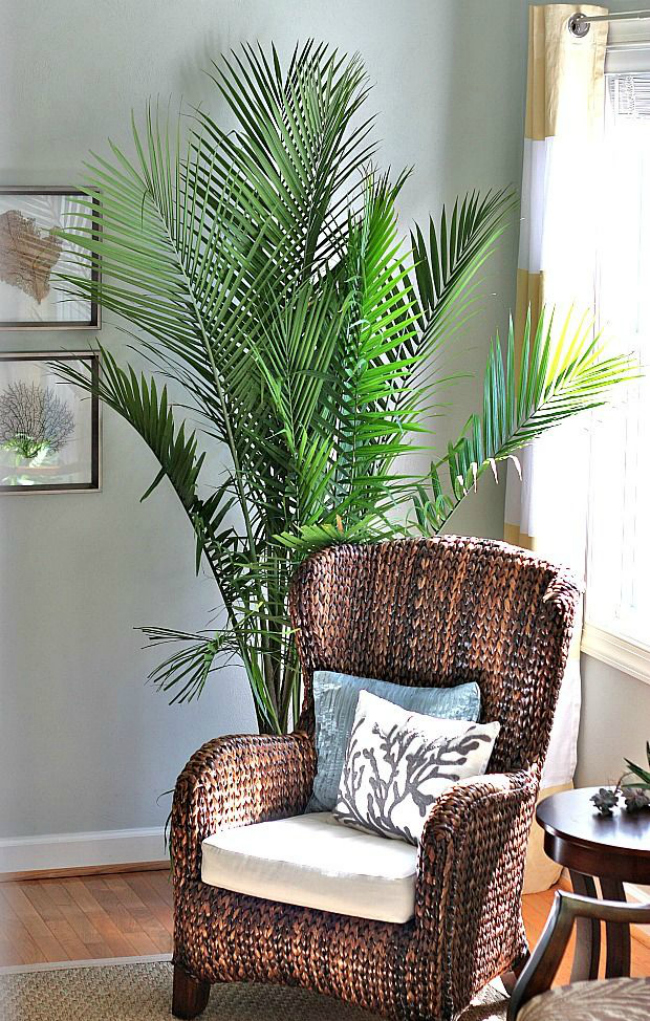 Top 10 Places For Large Houseplants