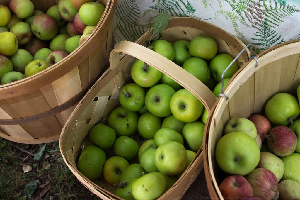 Baskets with apples