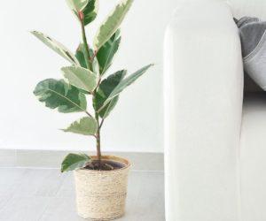 Transform An Old Plant Pot Into A Trendy Sisal Planter