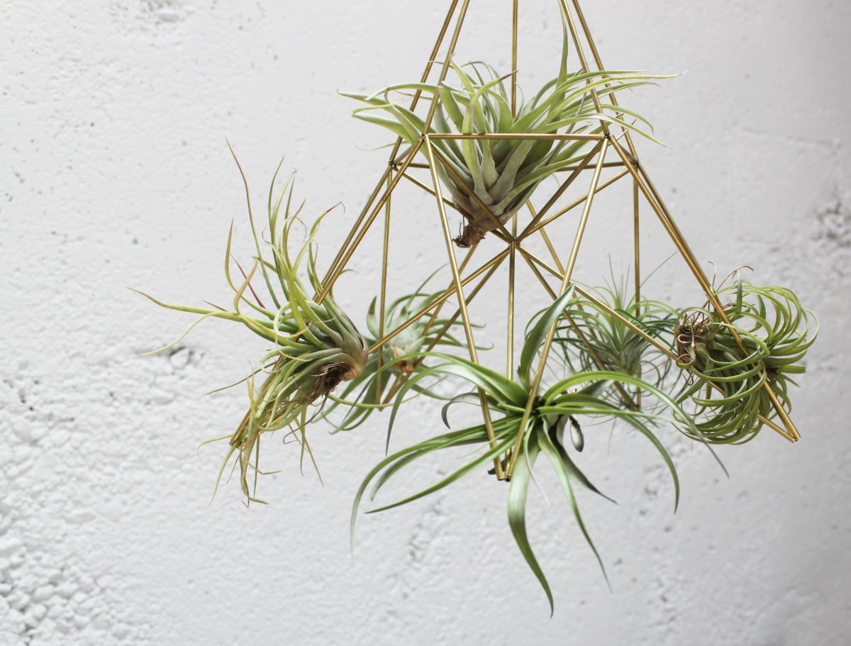 DIY Geometric Planters Big