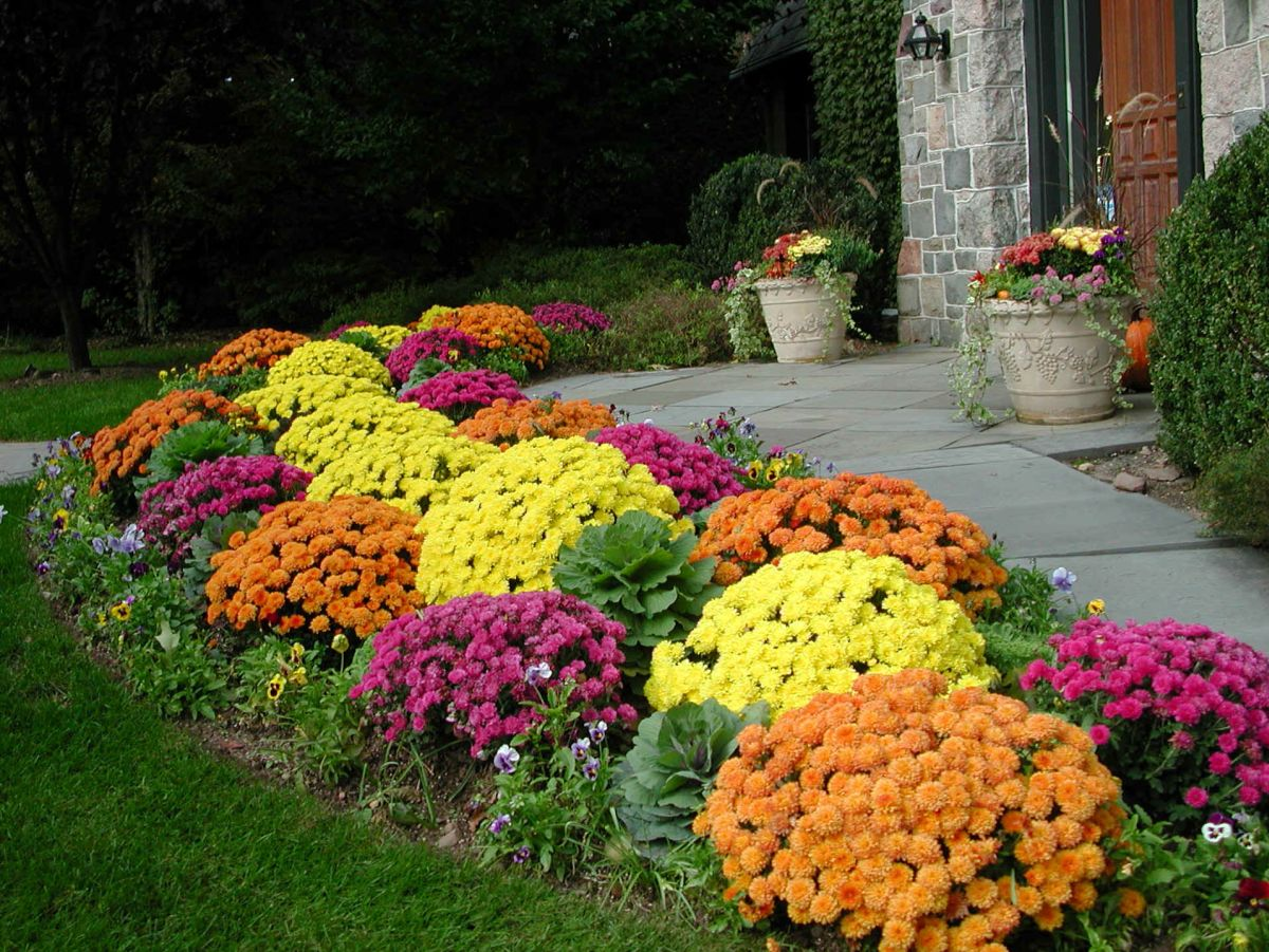 Fall Landscaping Tips 20 ways to help create a fall-inspired front lawn