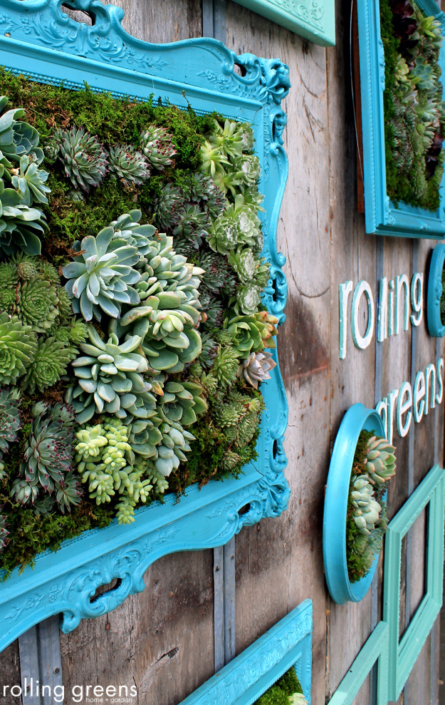 Framed Succulents For Wall Decor