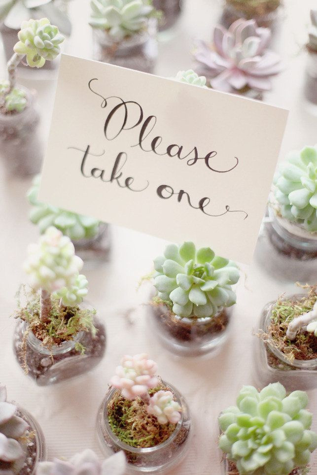 Little succulents favors