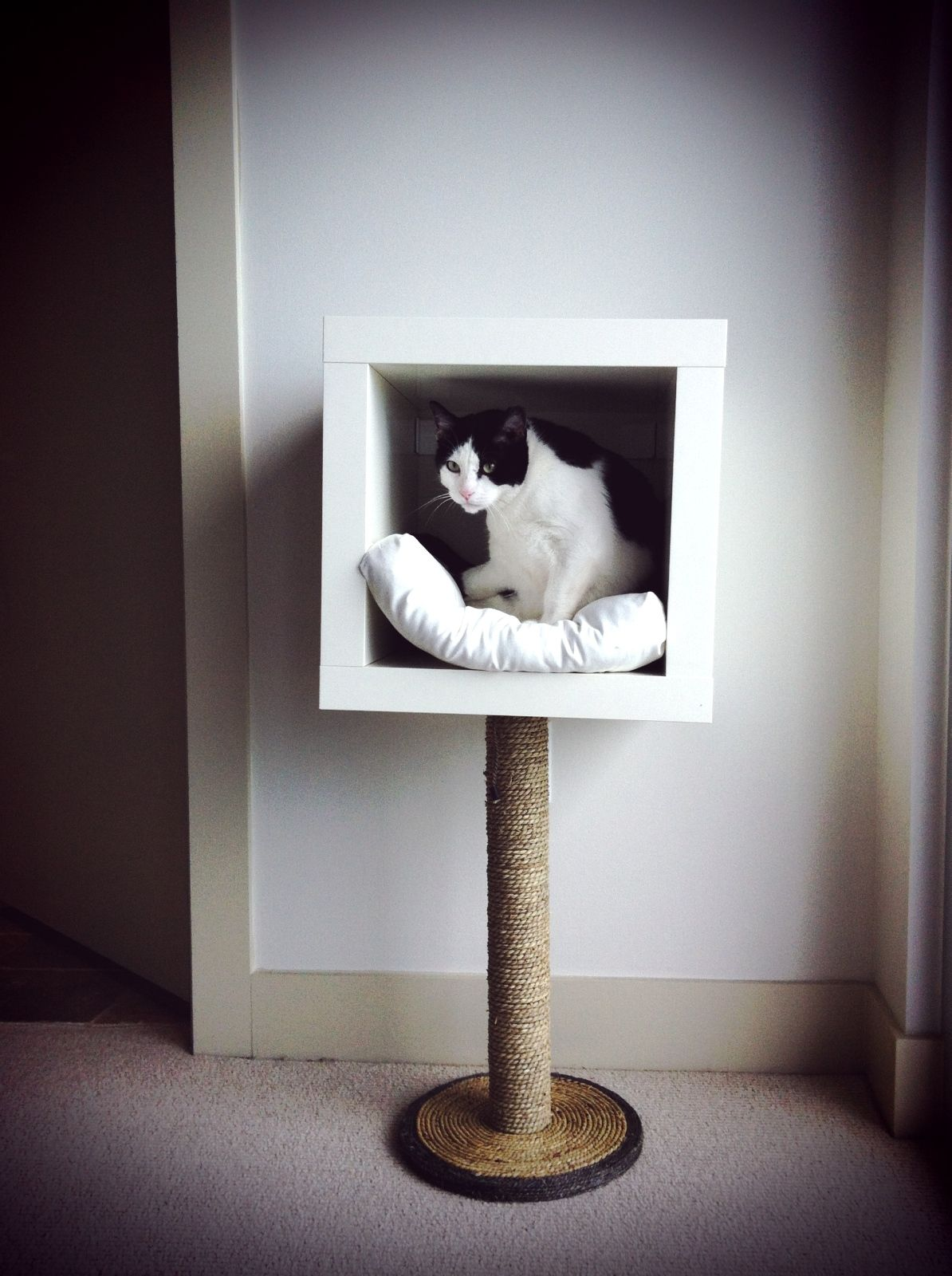 Modern Cat Tree Alternatives For Up-To-Date Pets