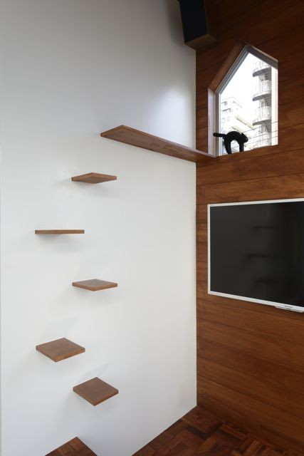 Wall shelves designed for climbing cats