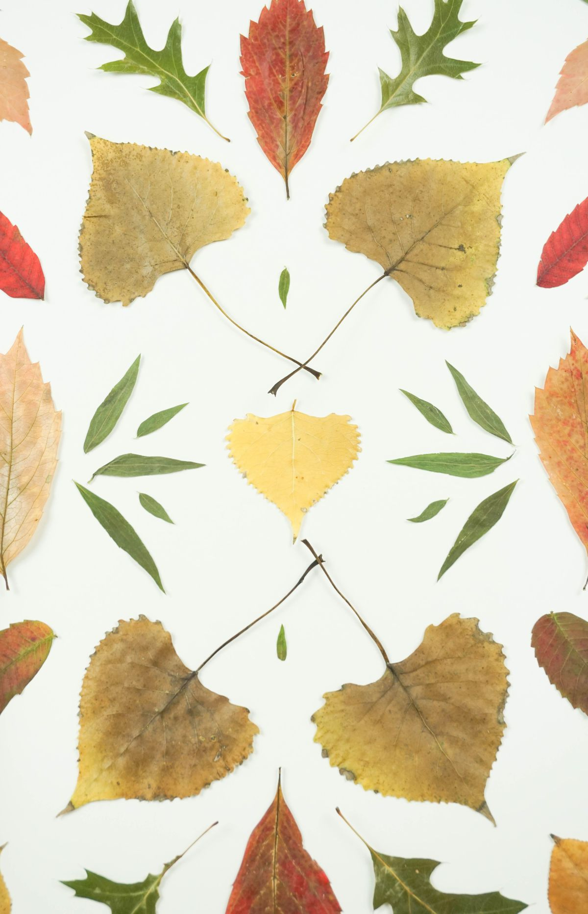 Autumnal Pressed Leaf Art Closer Look