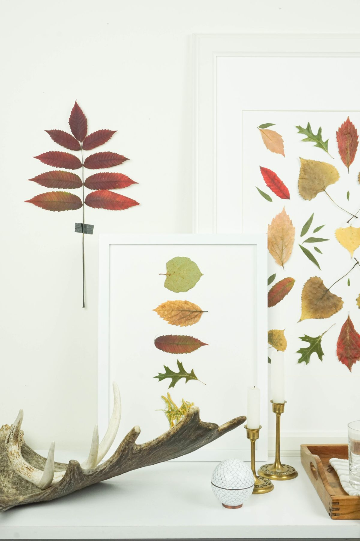 Autumnal Pressed Leaf Art Display