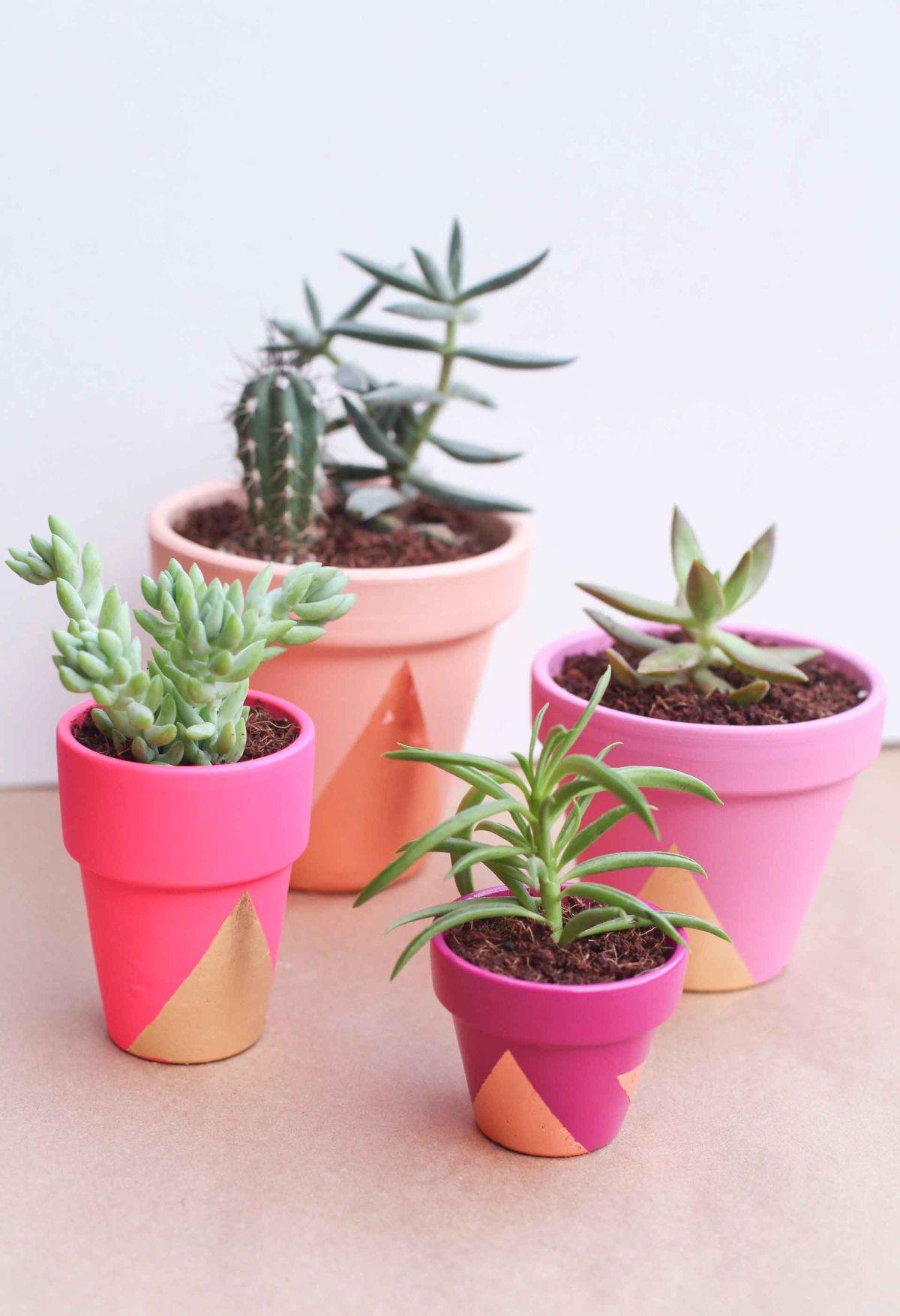 Bold Succulent Pots