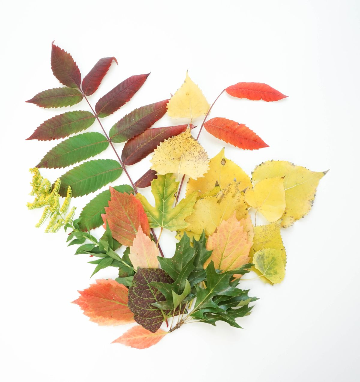 Collect fallen colorful leaves