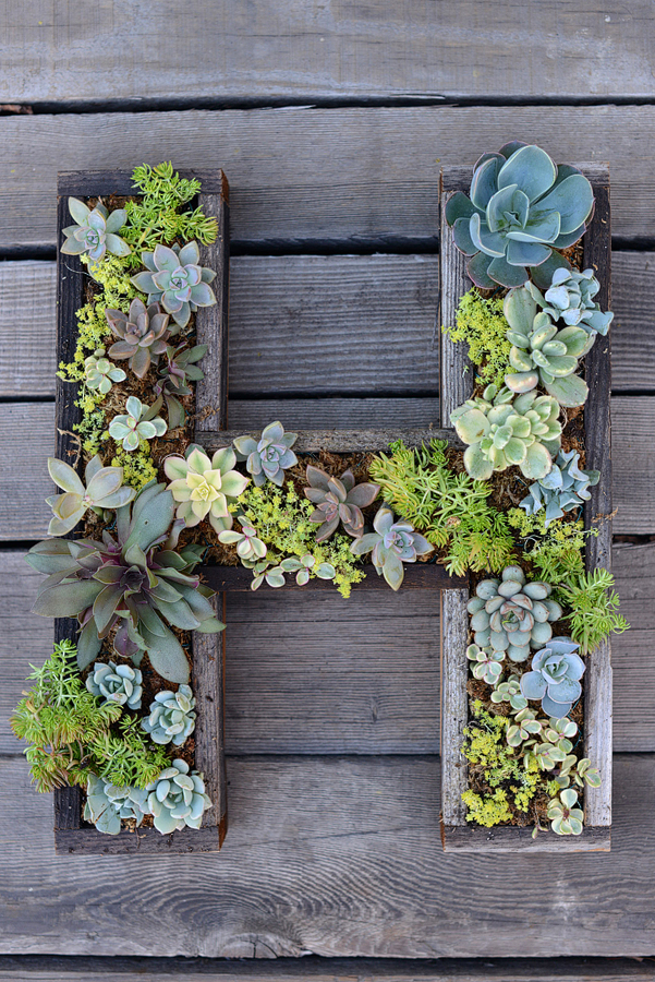 Succulent letters to decorate with