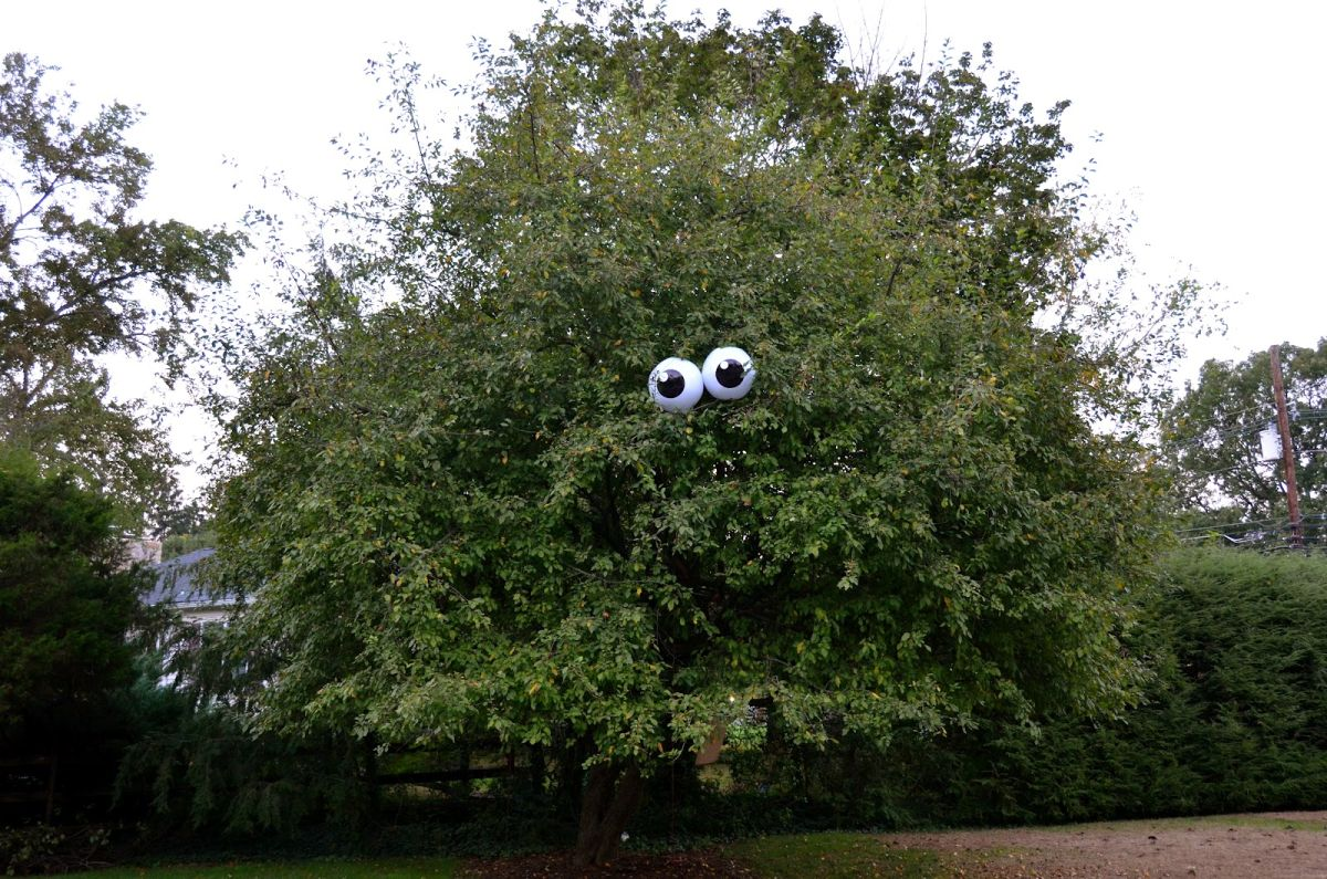 Tree googly eyes