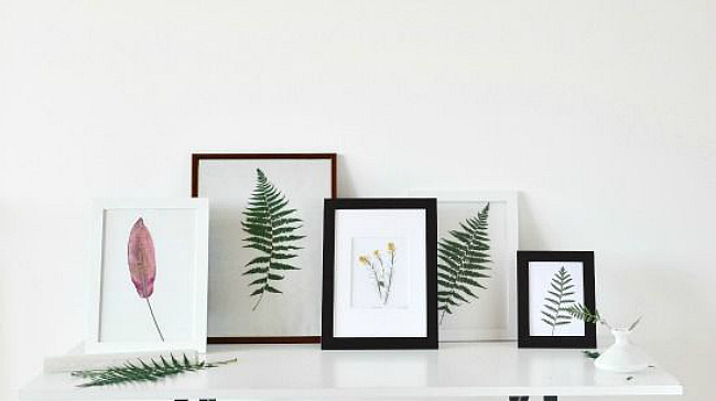 Botanical art gallery wall