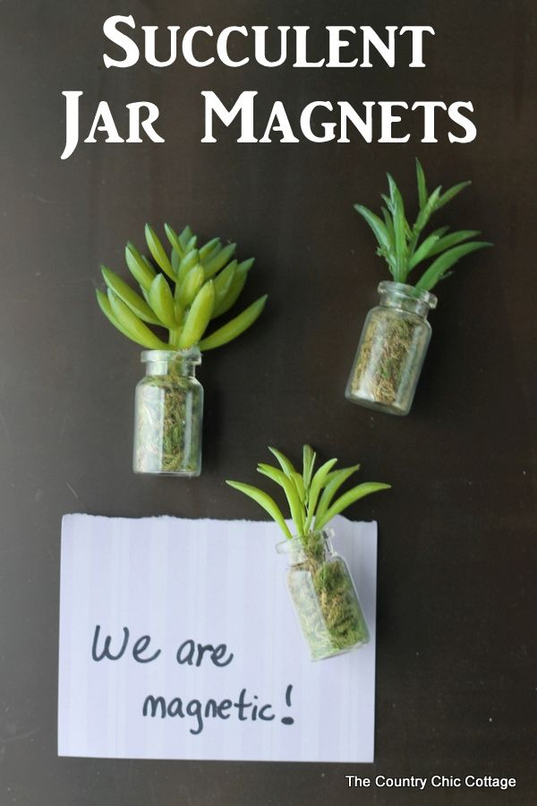 Cute succulent jar magnets