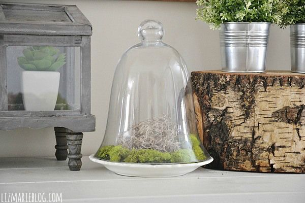 DIY Glass Cloche Moss Terrarium