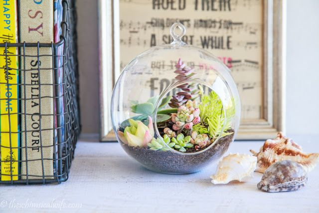 How to make a table succulent terrarium