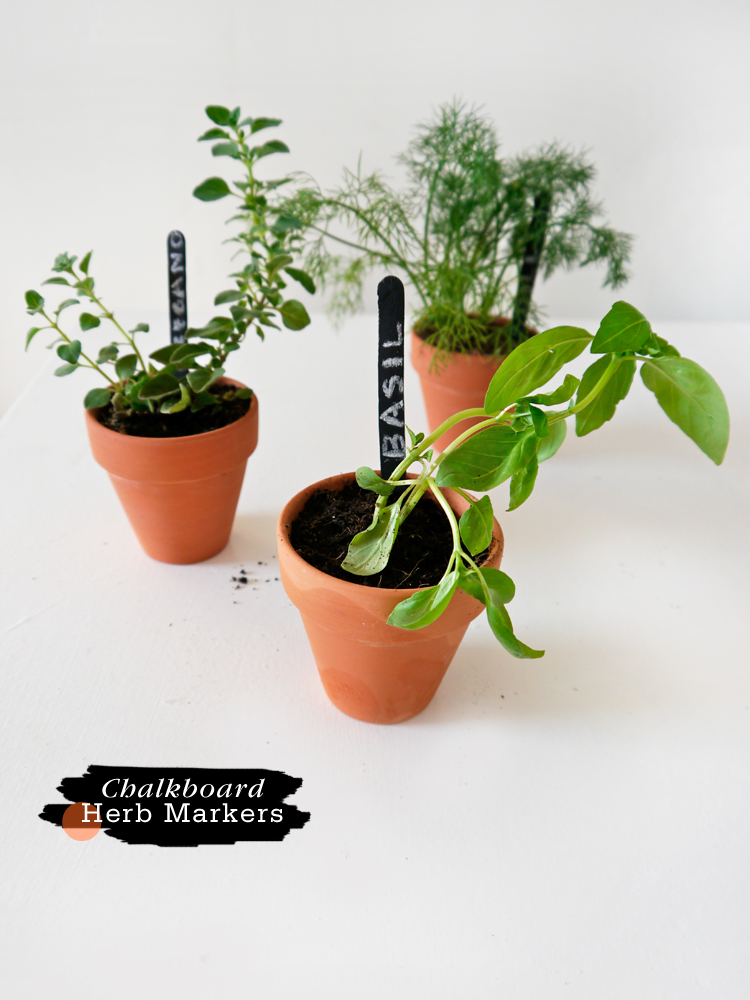 Individual popsicle sticks herb markers