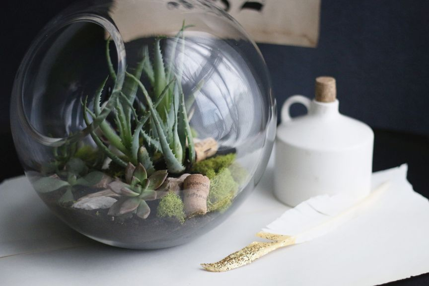 Tabletop terrarium DIY