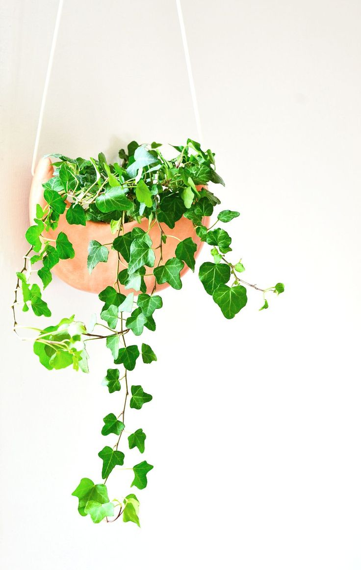 DIY hanging crescent planter