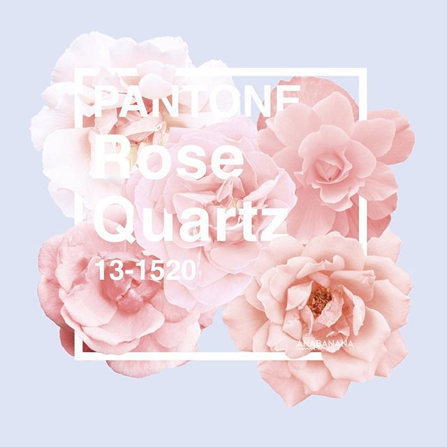 Pantone rose quartz cover