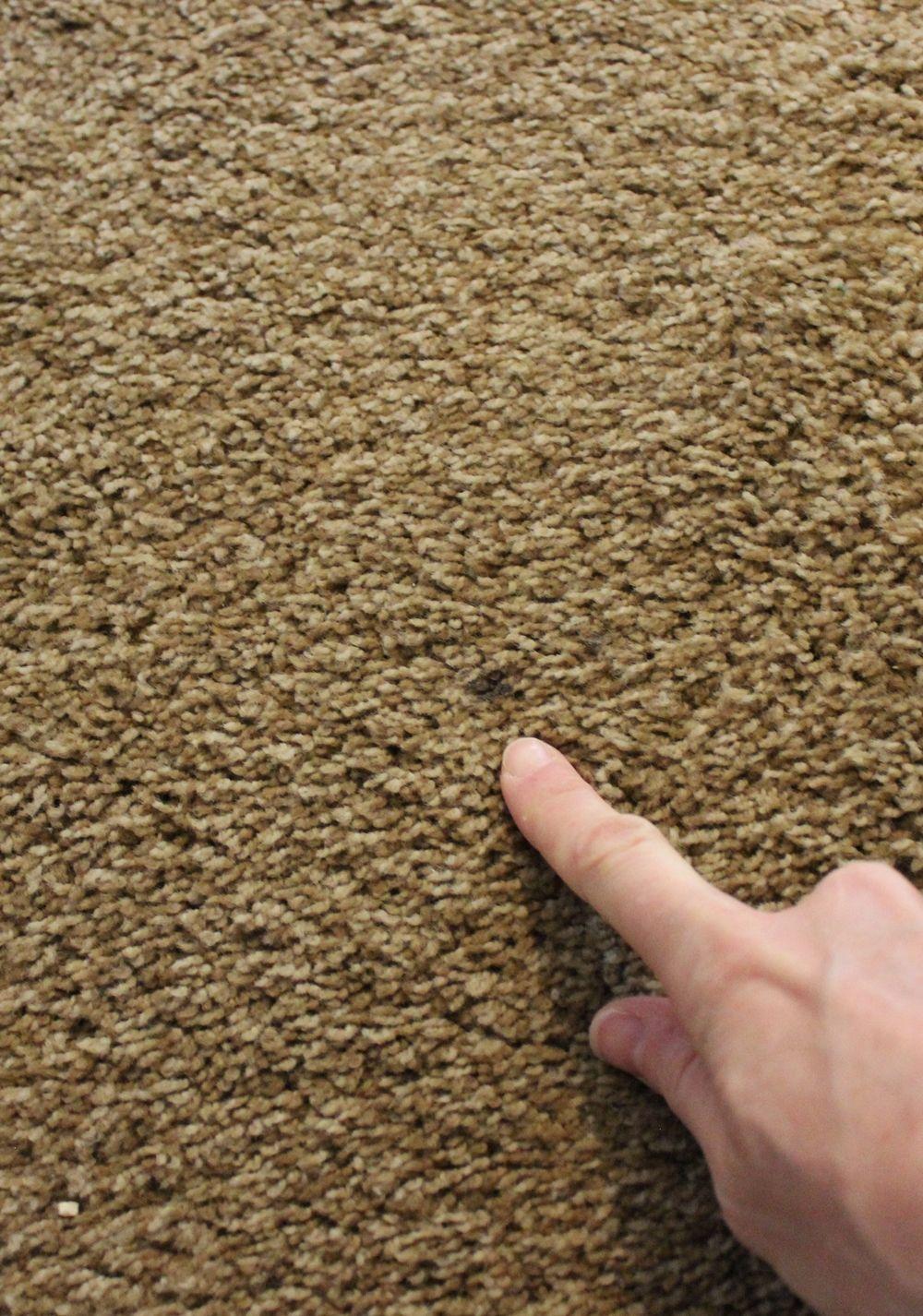 DIY Carpet Cleaner - spot