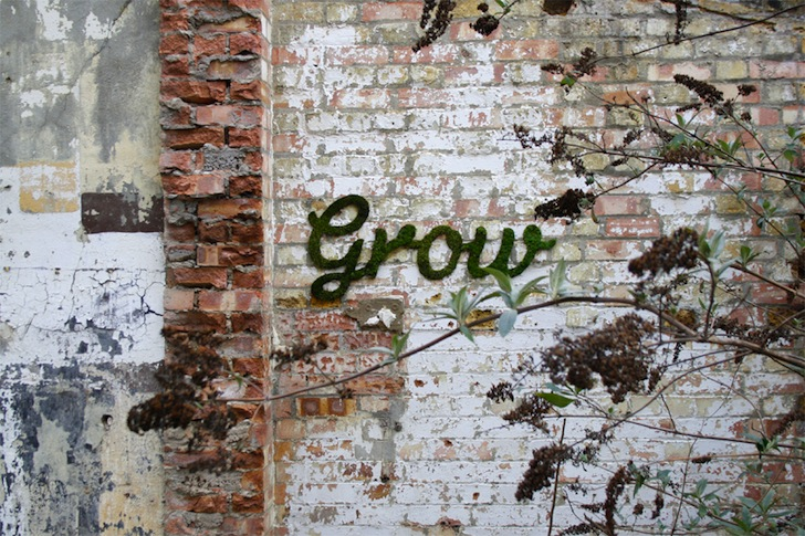 Grow Anna Galforth Moss Wall