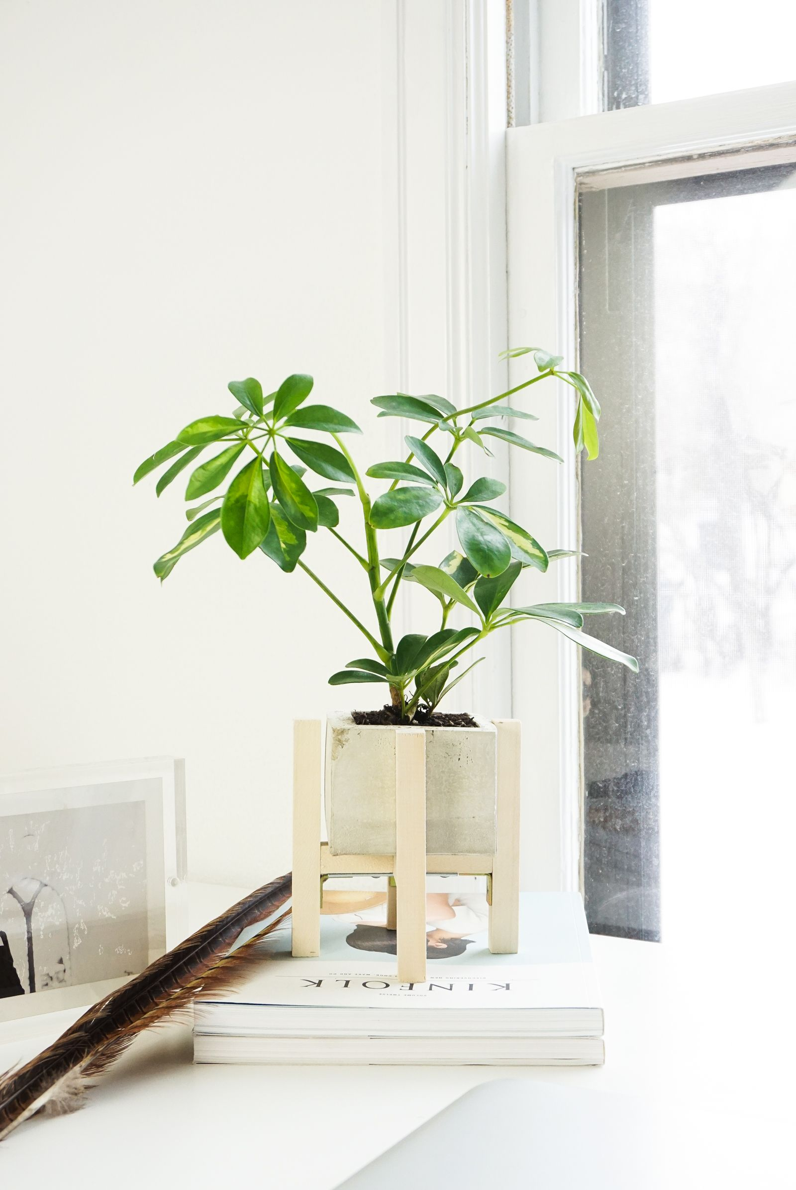 Modern minimalist concrete planter and wood