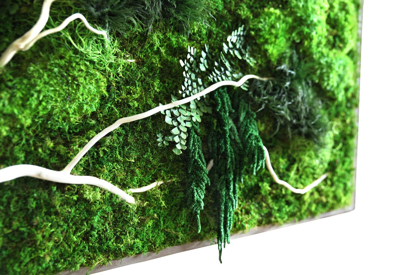 Moss framed art