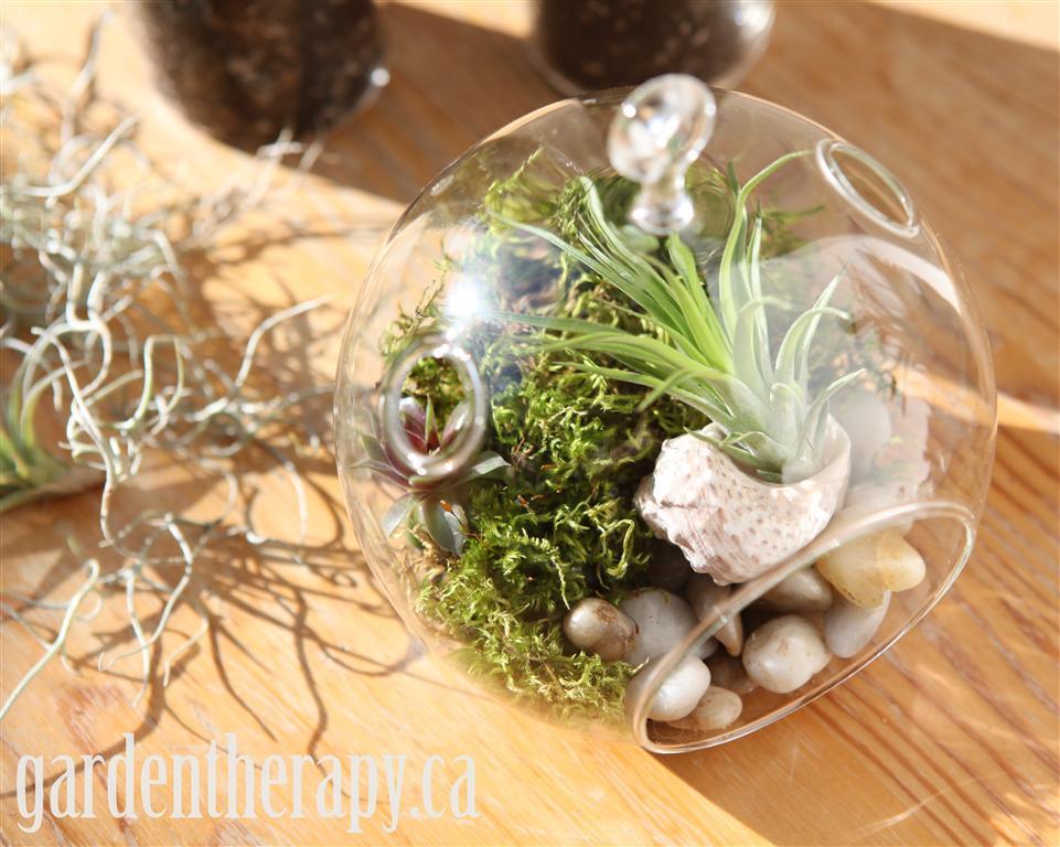 Moss globe terrarium