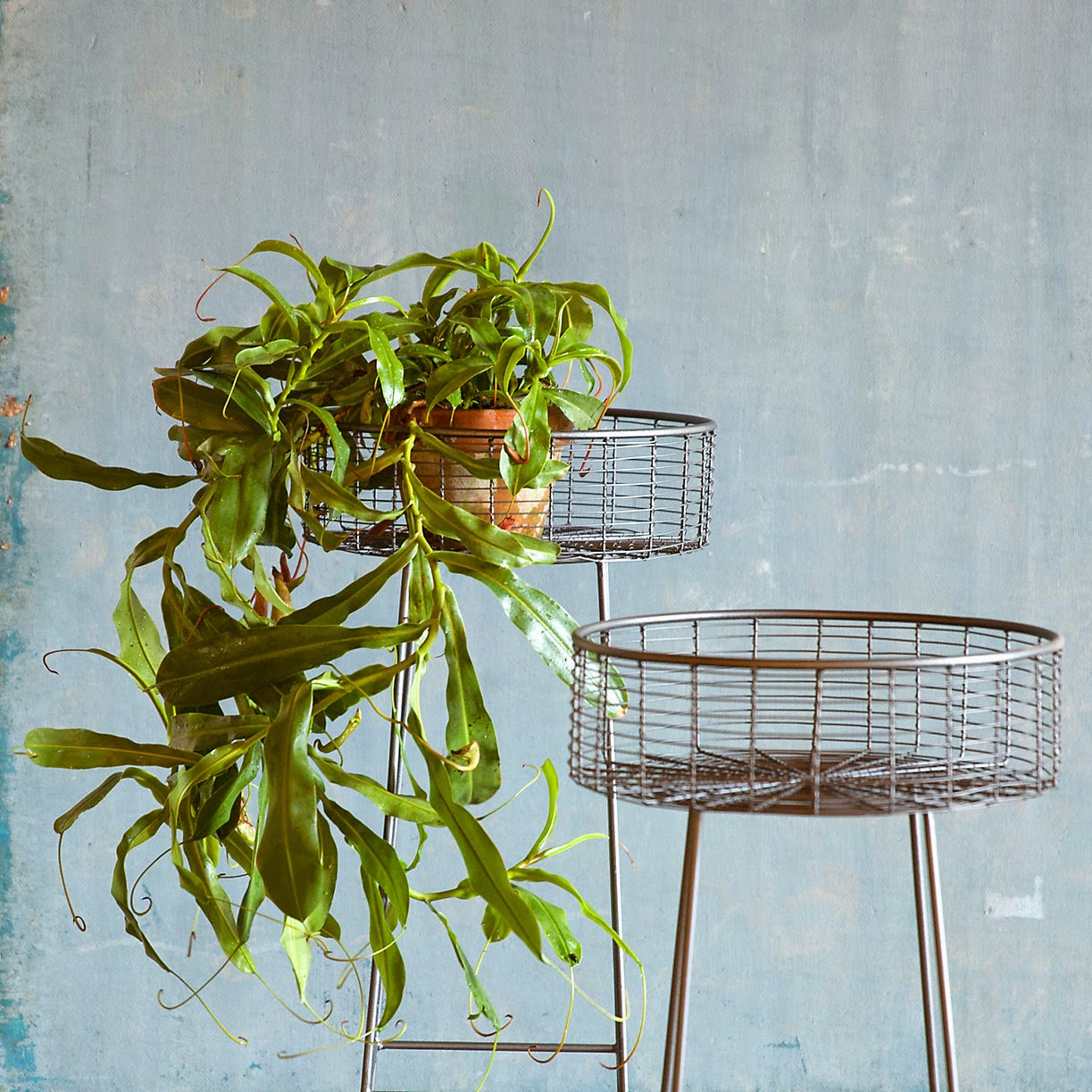 Basket plant stand