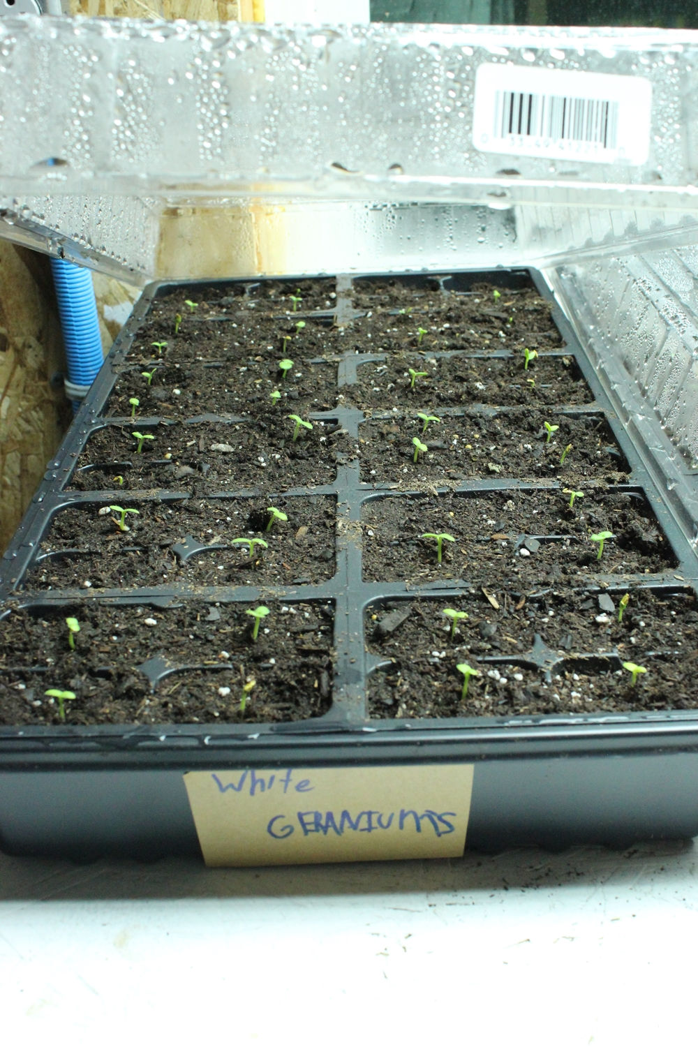 Germinate seeds
