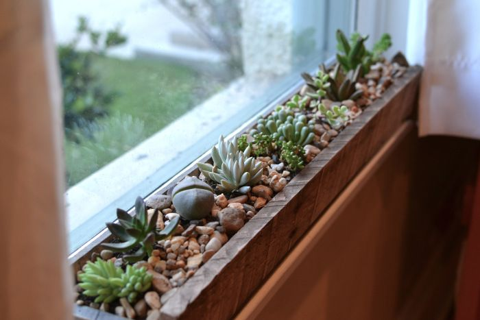 Indoor window box