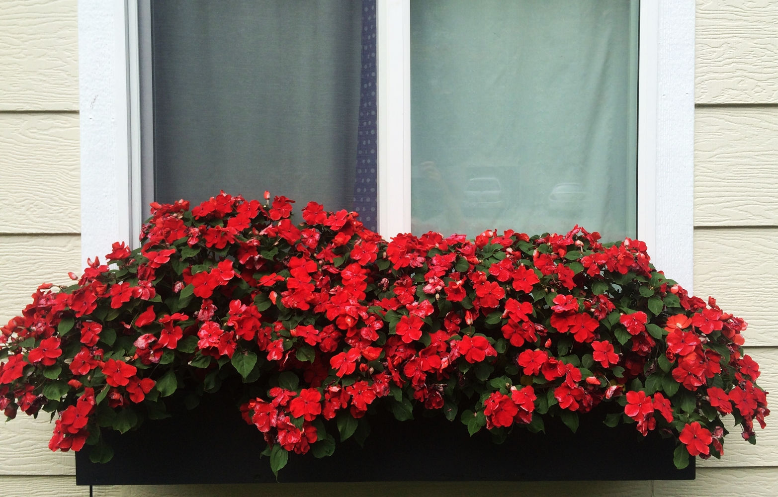 red window plants design