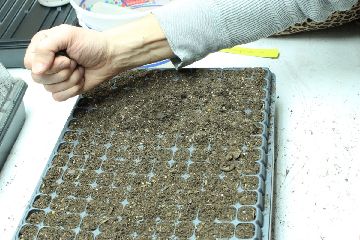 six rows of seeds