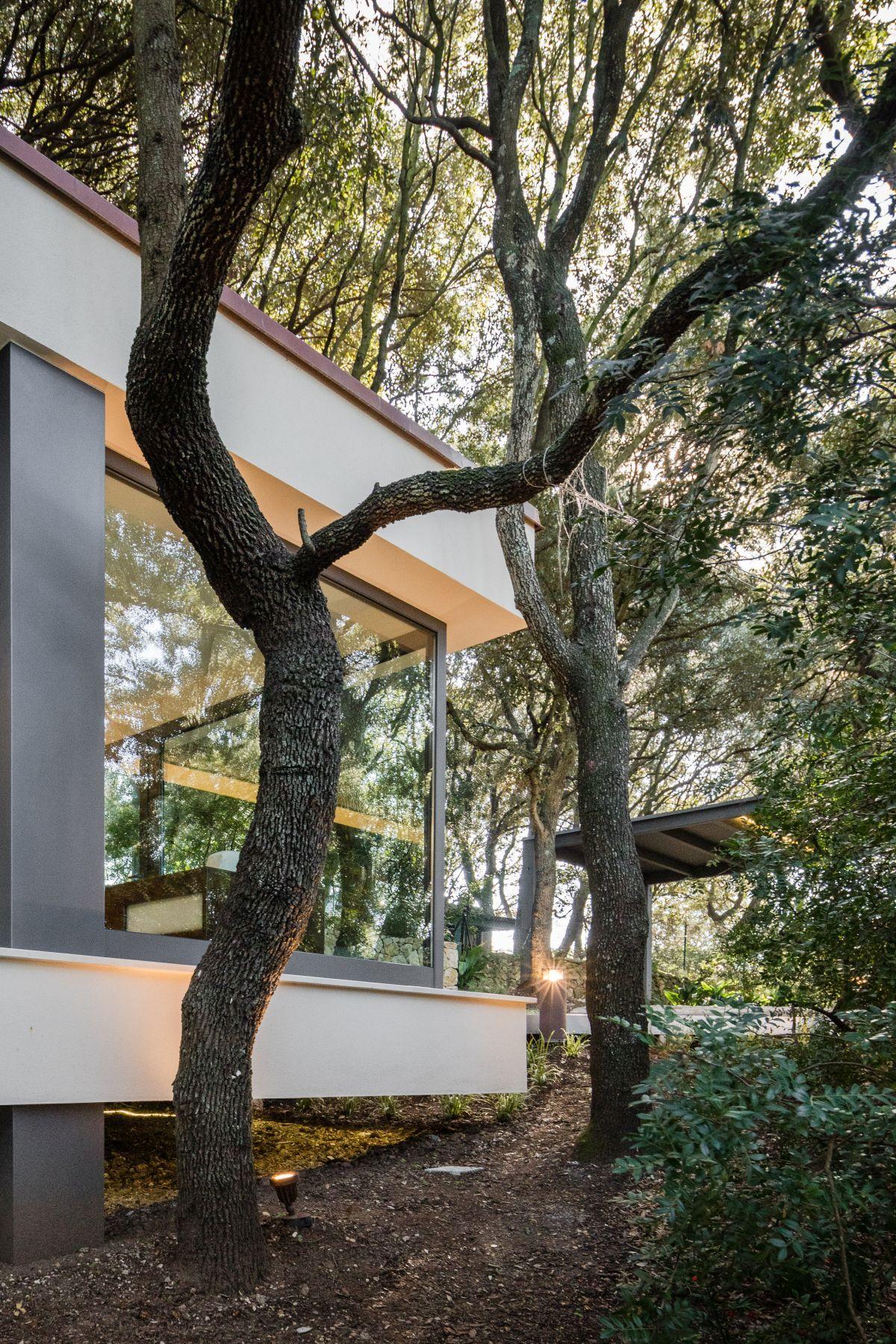 Casa nel Bosco sculptural tree branches
