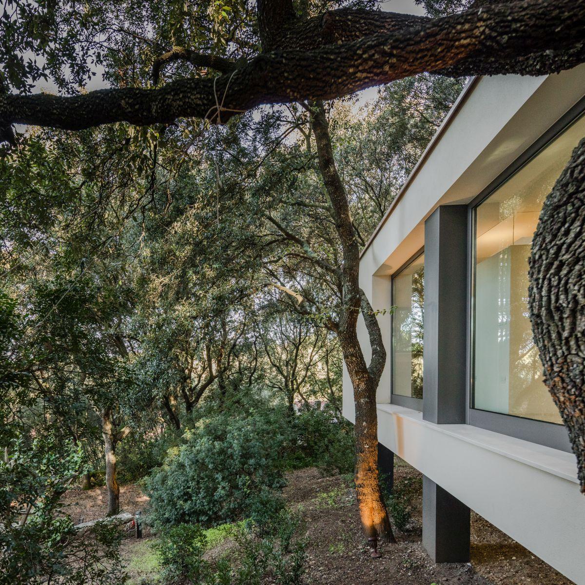 Casa nel Bosco surrounded by oak forest
