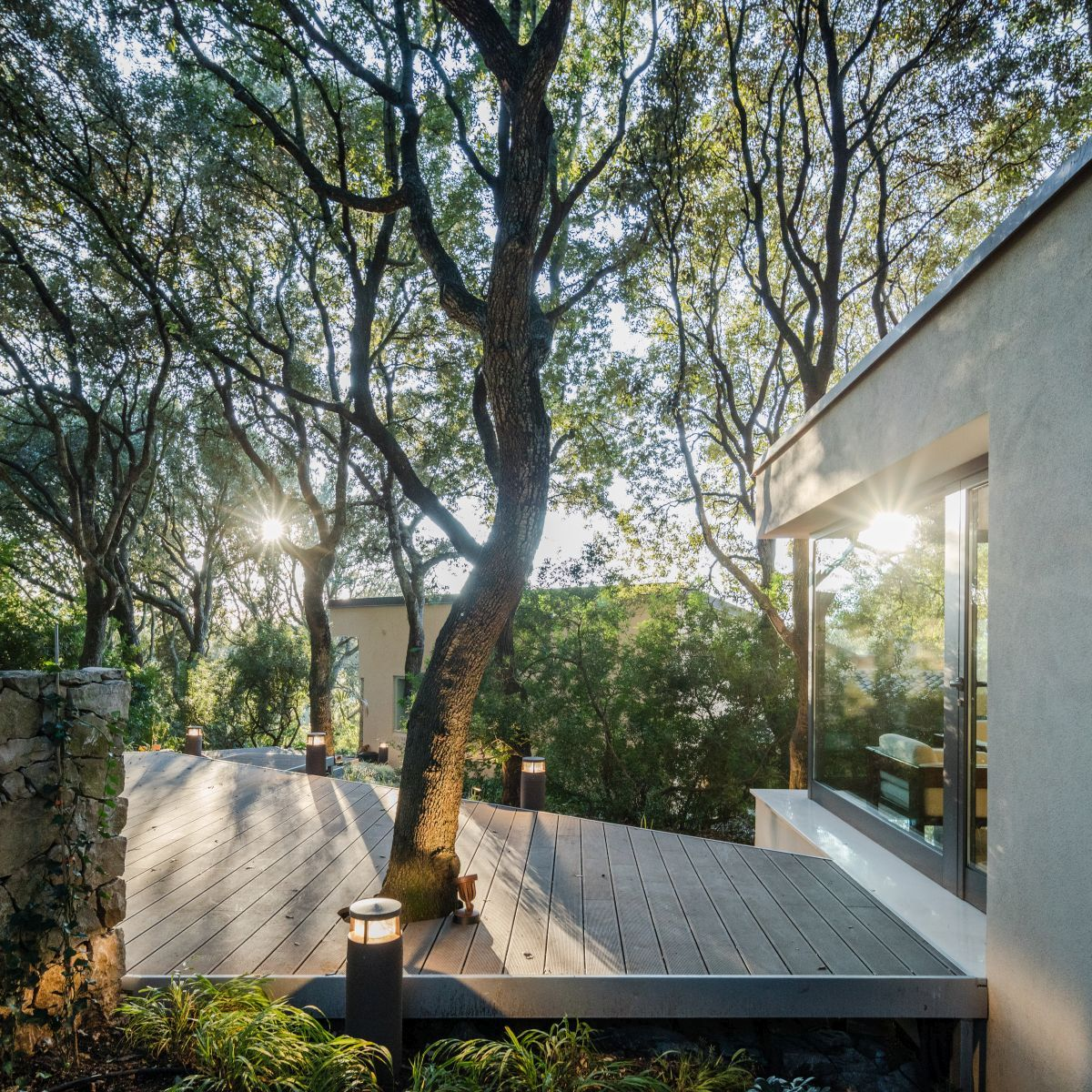 Casa nel Bosco trees growing through terrace
