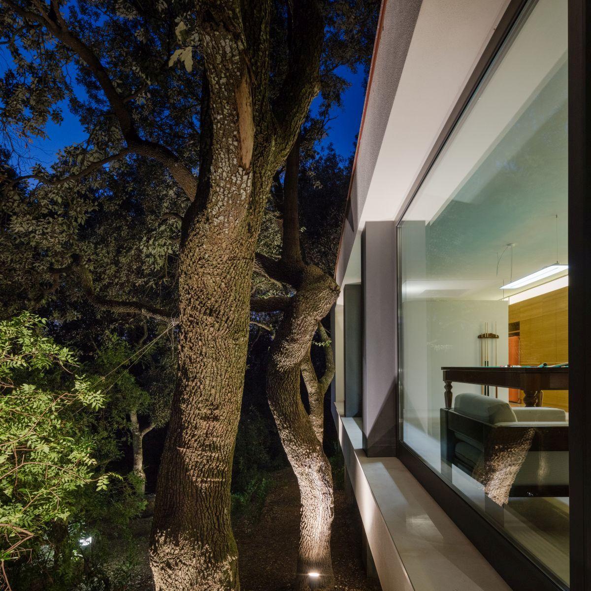 Casa nel Bosco trees illuminated at night