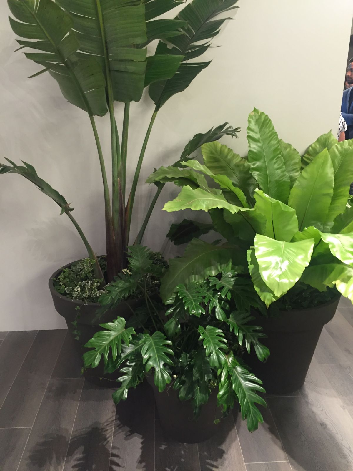 Corner plants that purify the air