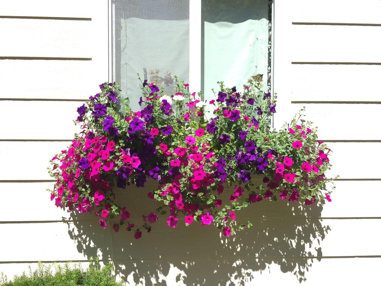 DIY Flower Bed Starts -beautiful window flowers