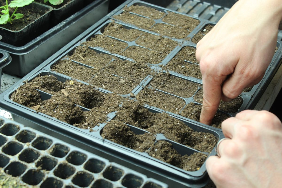 DIY Flower Bed Starts-create holes in the center