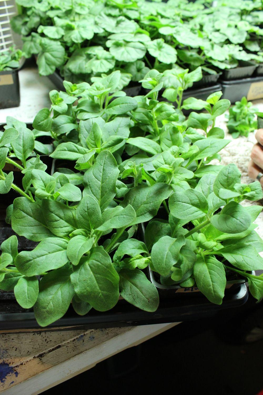 DIY Flower Bed Starts - green plants