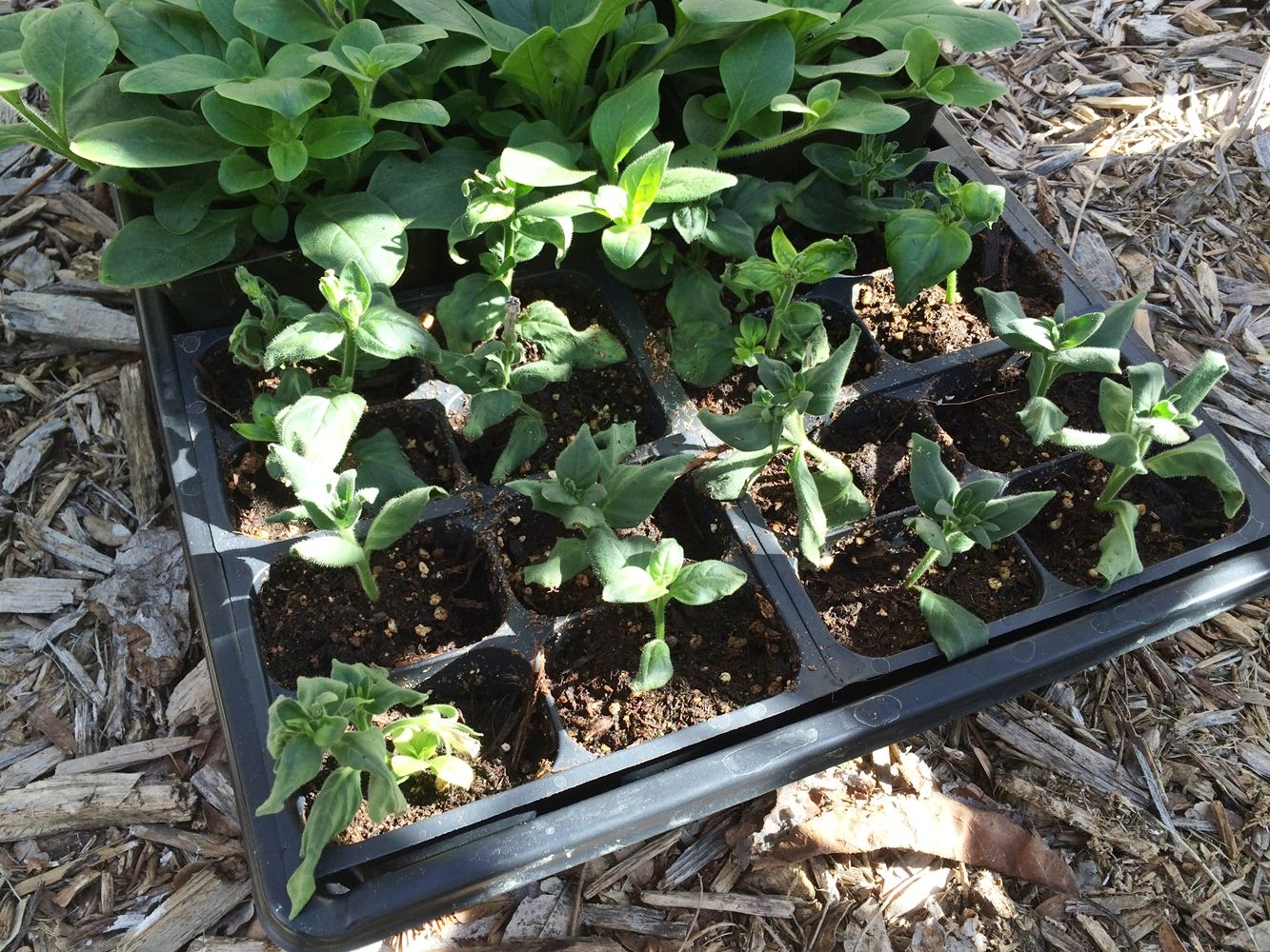 DIY Flower Bed Starts - ready