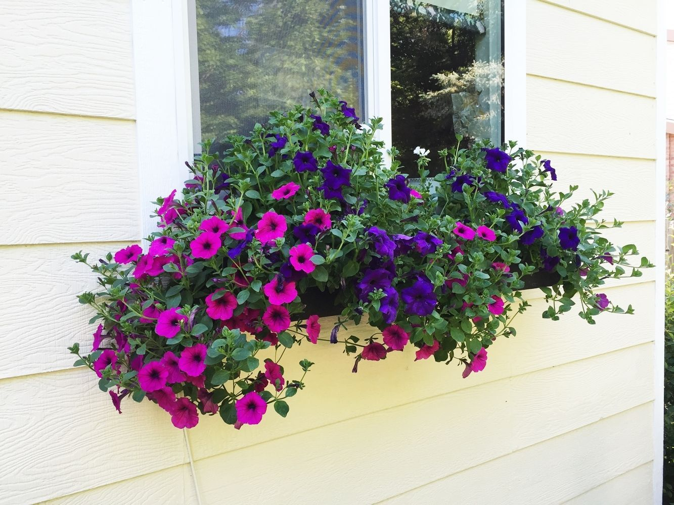 DIY Flower Bed Starts -window boxes