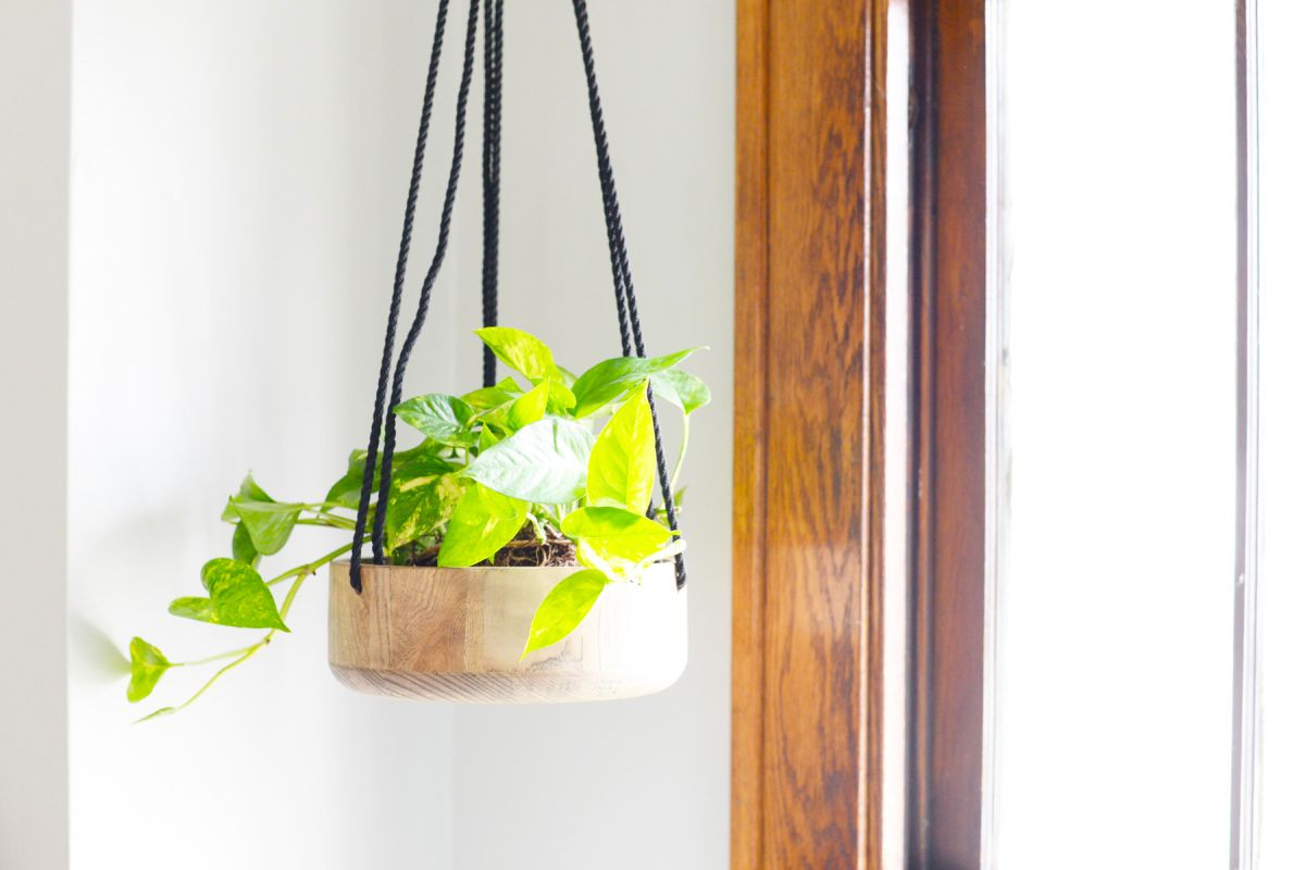 DIY Wooden Hanging Planter - Earth