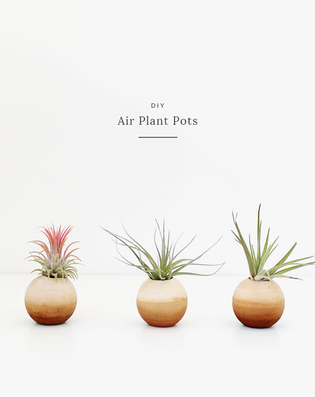 DIY air plant pots