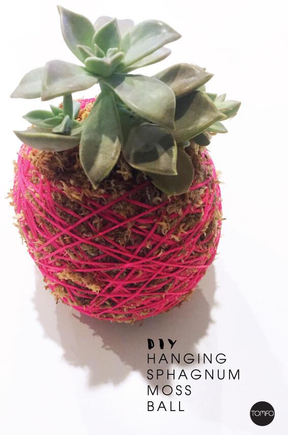 Spagnum Moss Ball